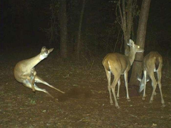 flagrantes-cam-vigilancia-florestal_1
