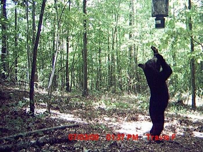 flagrantes-cam-vigilancia-florestal_11