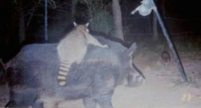 flagrantes-cam-vigilancia-florestal_12