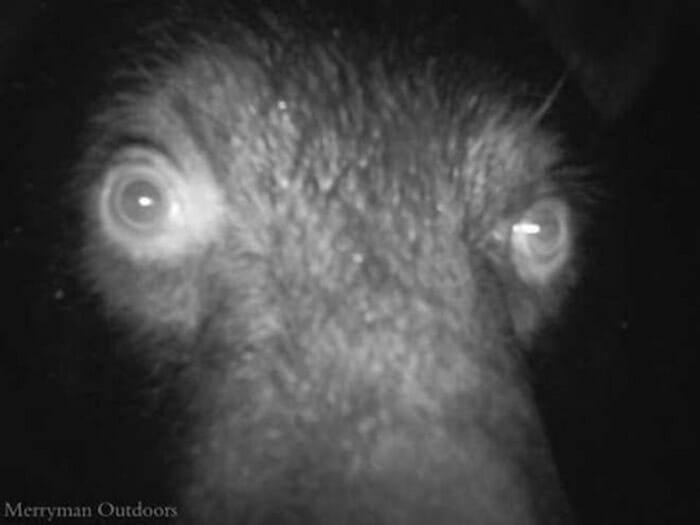 flagrantes-cam-vigilancia-florestal_15