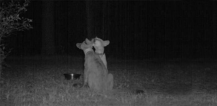 flagrantes-cam-vigilancia-florestal_18
