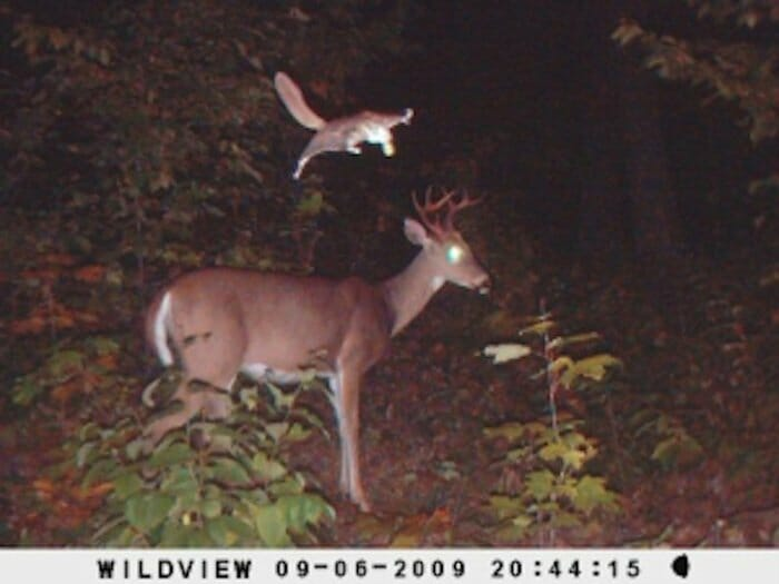 flagrantes-cam-vigilancia-florestal_19