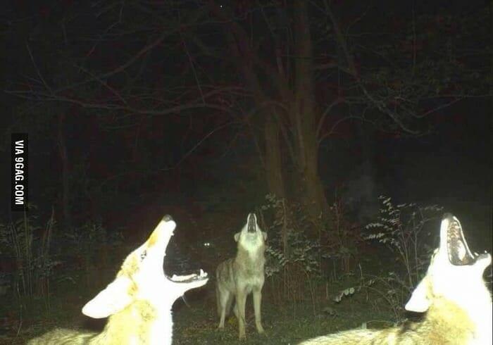 flagrantes-cam-vigilancia-florestal_2