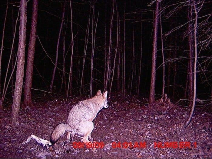 flagrantes-cam-vigilancia-florestal_20