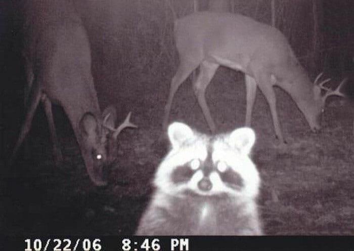 flagrantes-cam-vigilancia-florestal_4