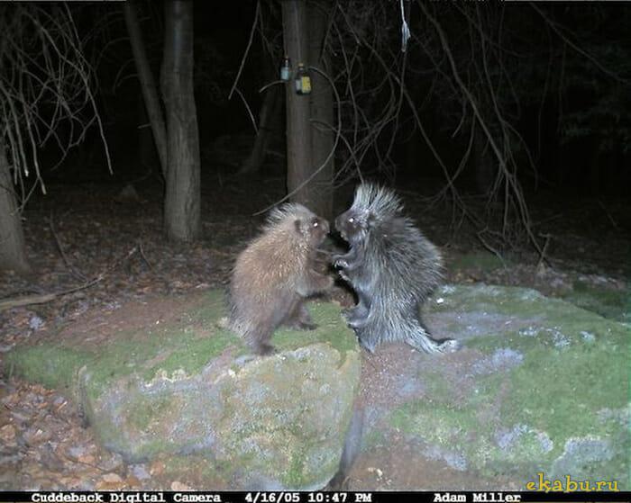 flagrantes-cam-vigilancia-florestal_5