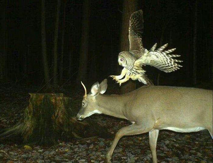 flagrantes-cam-vigilancia-florestal_7