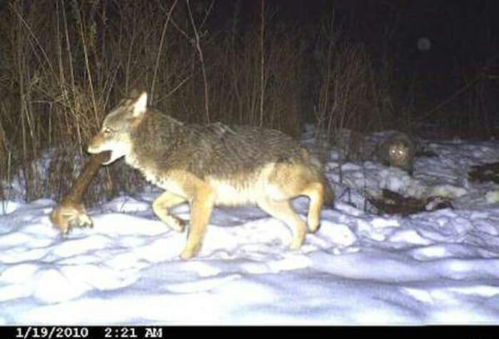 flagrantes-cam-vigilancia-florestal_9