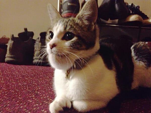 gatos-vs-abelhas_15