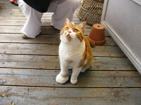 gatos-vs-abelhas_5