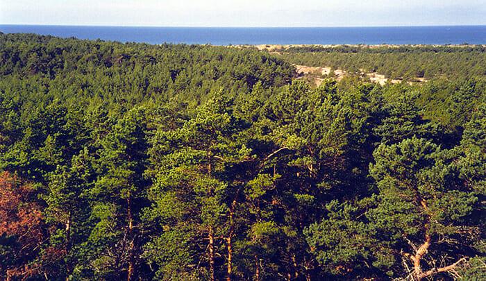 FONTE: pt.wikipedia.org / FOTO: en.wikipedia.org