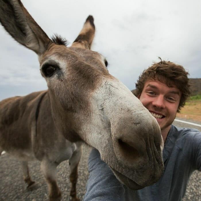 selfies-animais-allan-dixon_17
