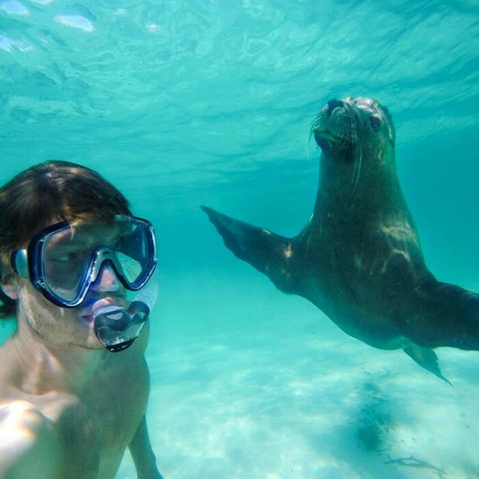selfies-animais-allan-dixon_4