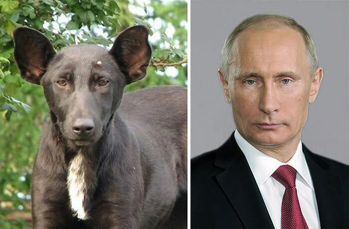 cachorros-que-ce-parecem_5