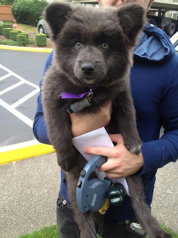 cachorro-urso_1
