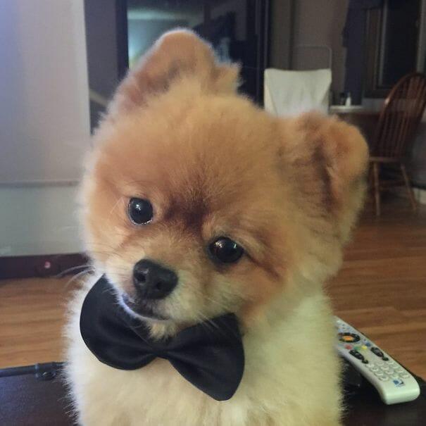 cachorro-urso_16