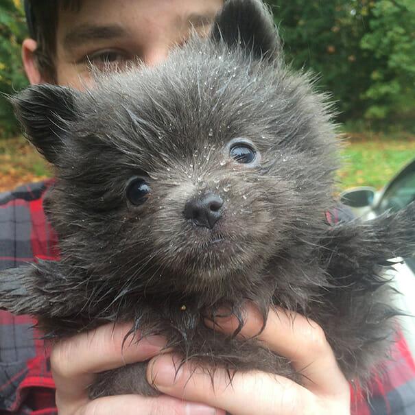 cachorro-urso_3