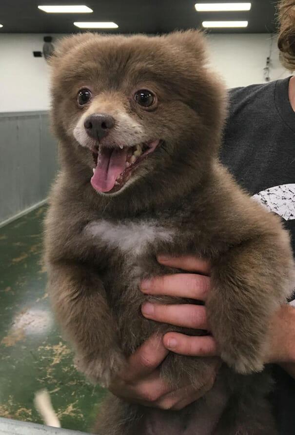 cachorro-urso_4
