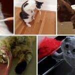 17 Gifs engraçados de animais que se arrependeram de suas decisões