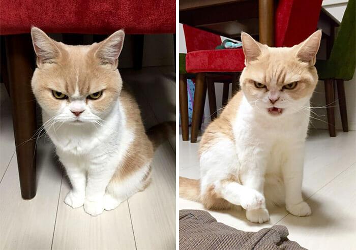 grumpy-cat-japonês