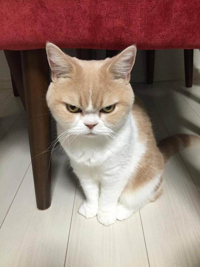 grumpy-cat-japonês_1