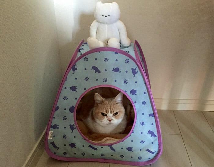 grumpy-cat-japonês_10