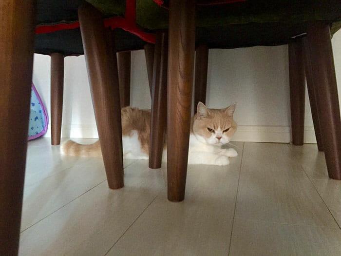 grumpy-cat-japonês_12