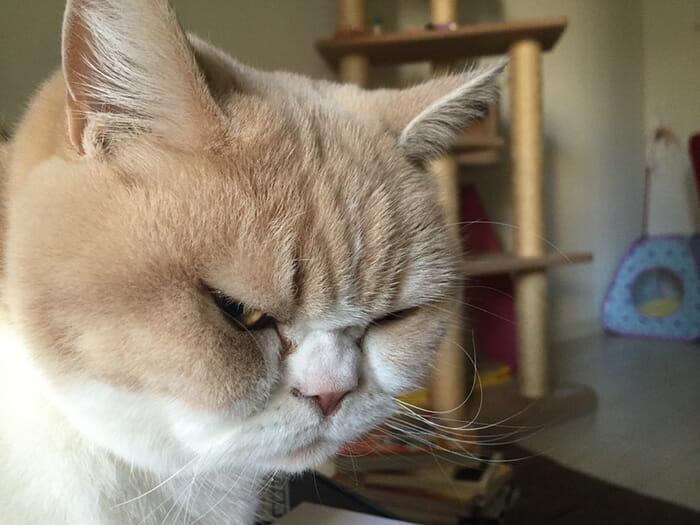 grumpy-cat-japonês_13
