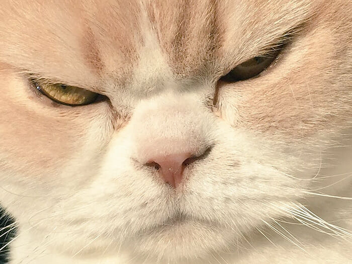 grumpy-cat-japonês_14
