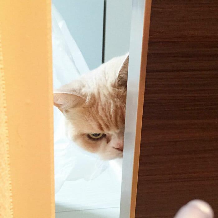 grumpy-cat-japonês_2