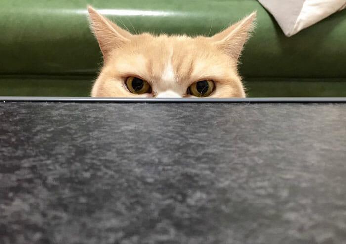 grumpy-cat-japonês_4