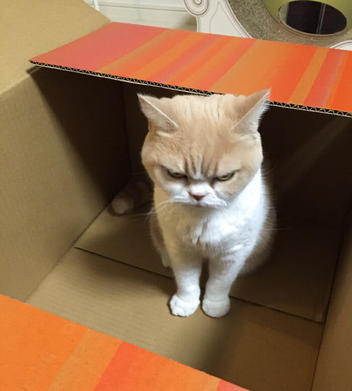 grumpy-cat-japonês_5