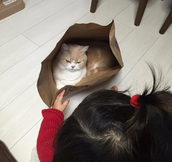 grumpy-cat-japonês_6