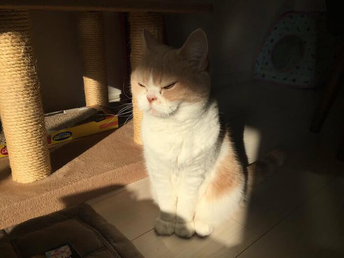 grumpy-cat-japonês_8