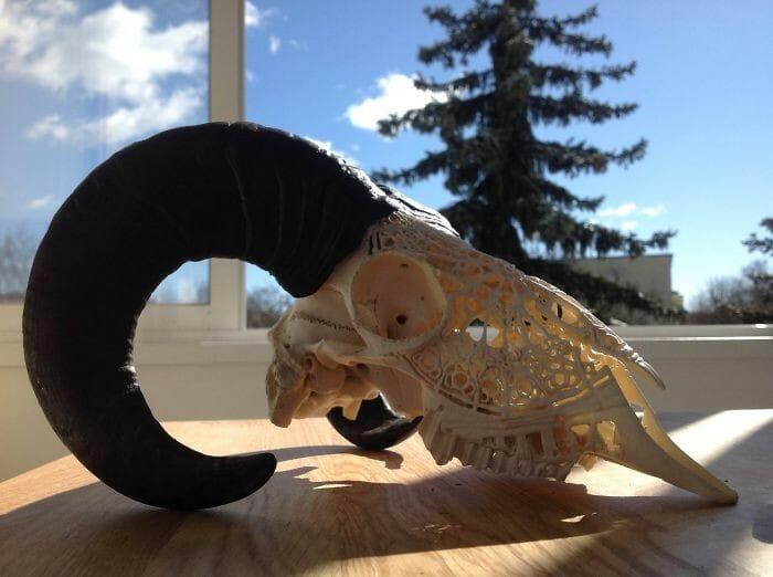 A incrível arte de Bozhok Mikhail feita em crânios de animais