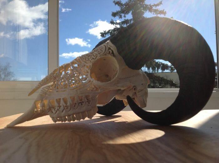 arte-em-cranios_3