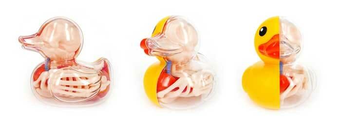 baloes-anatomicos_3