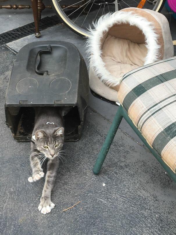 logica-incompreensivel-dos-gatos_1