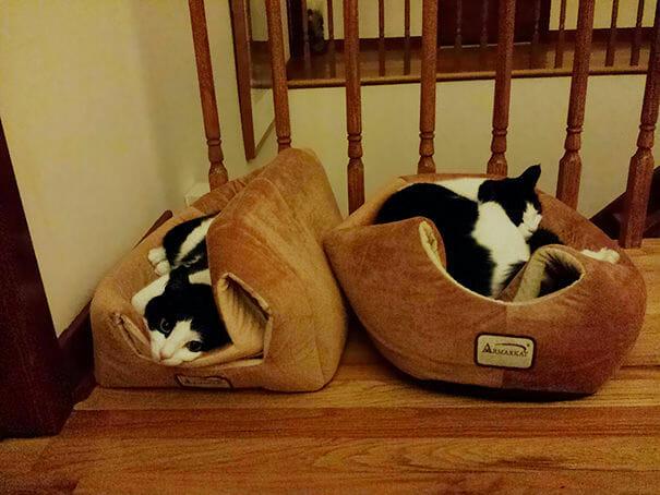 logica-incompreensivel-dos-gatos_13
