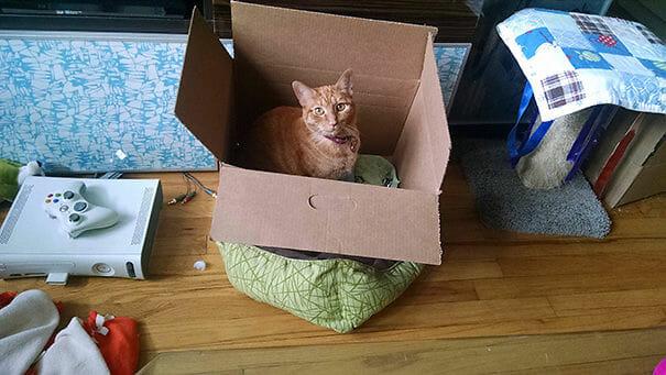 logica-incompreensivel-dos-gatos_16