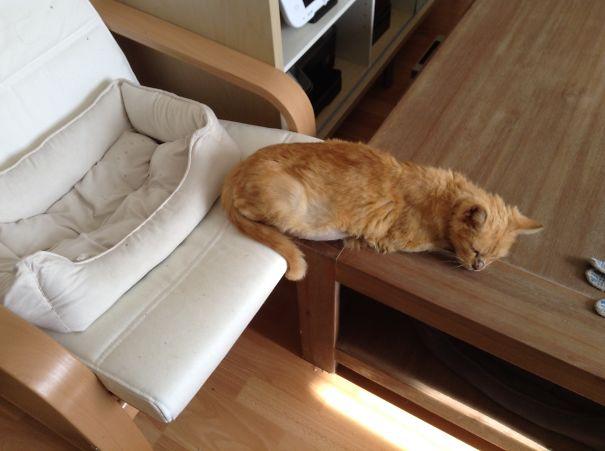 logica-incompreensivel-dos-gatos_20