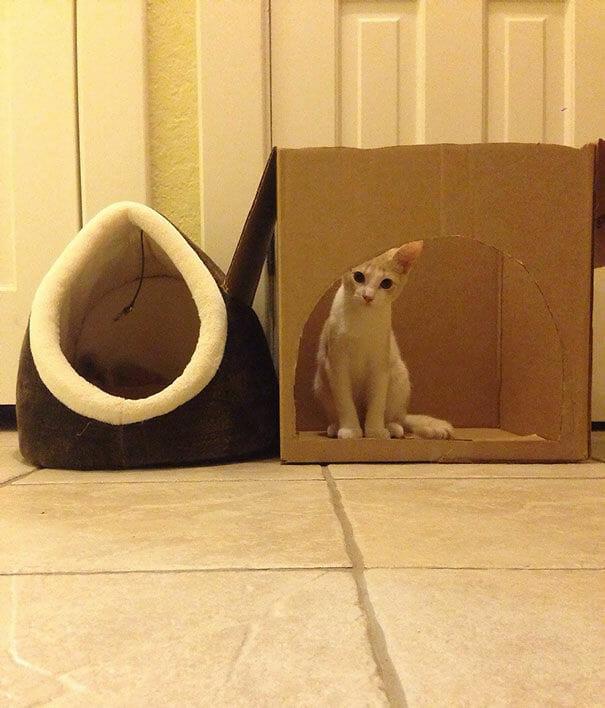 logica-incompreensivel-dos-gatos_21