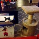 28 Imagens hilárias sobre a lógica incompreensível dos gatos