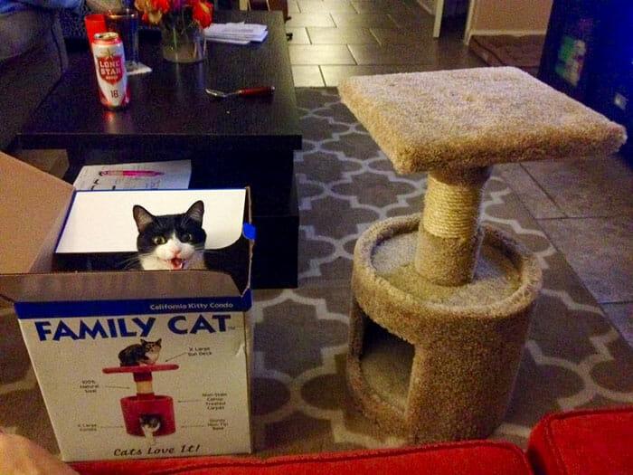 logica-incompreensivel-dos-gatos_4