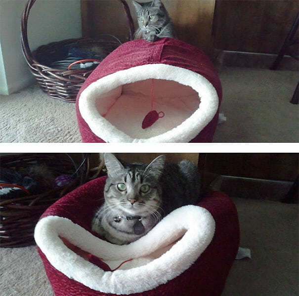 logica-incompreensivel-dos-gatos_5