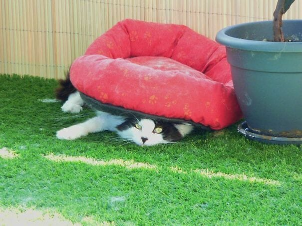 logica-incompreensivel-dos-gatos_9