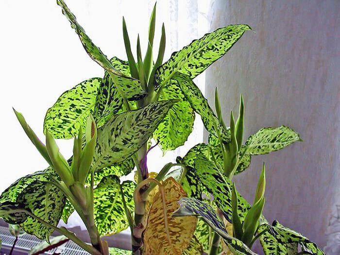 plantas-venosas_2