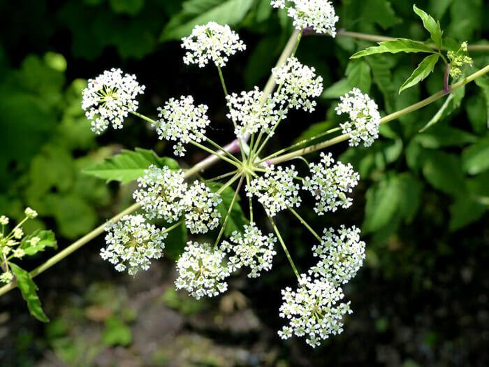 plantas-venosas_9