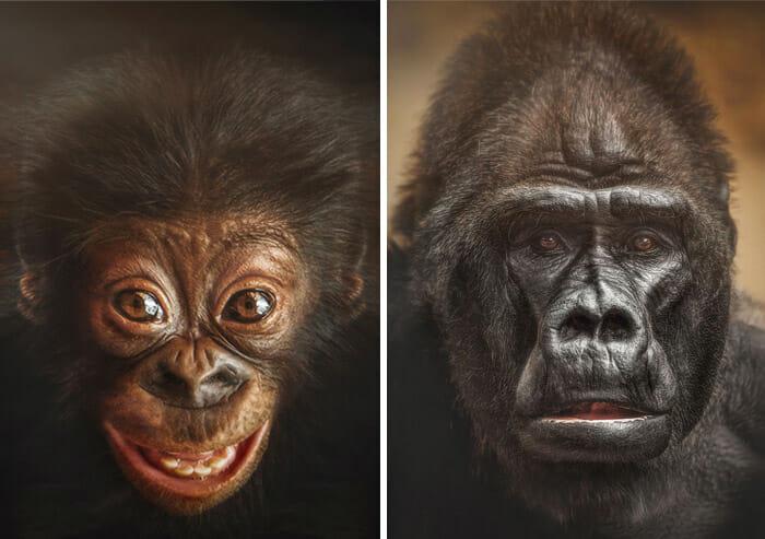 similaridade-expressoes-macacos