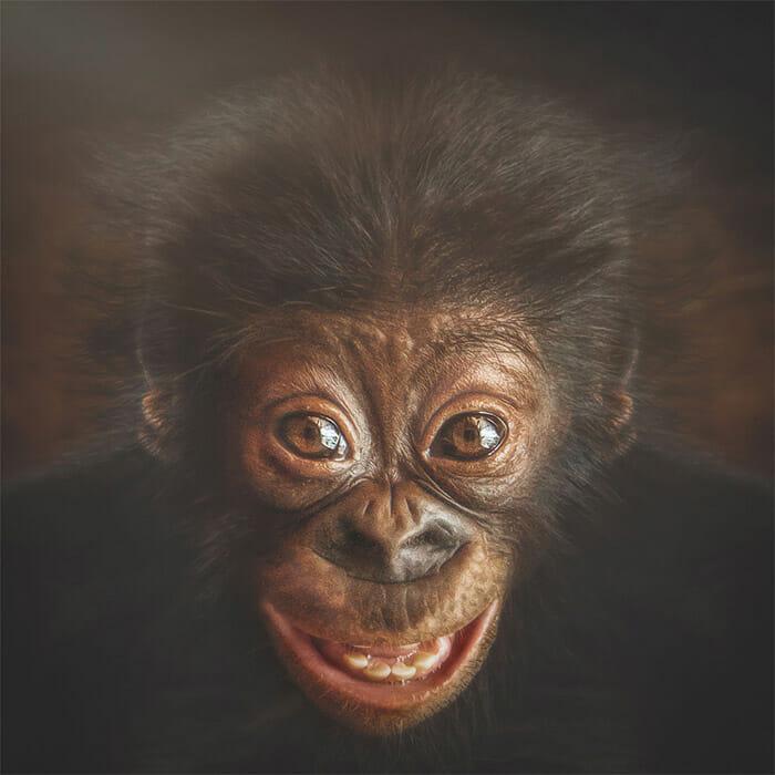 similaridade-expressoes-macacos_1